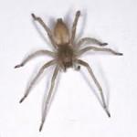 Faire fuir les araignées