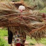 journee femme maroc